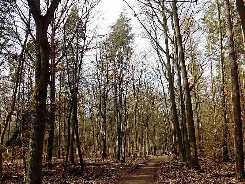German lesson #1 Wald und Baum